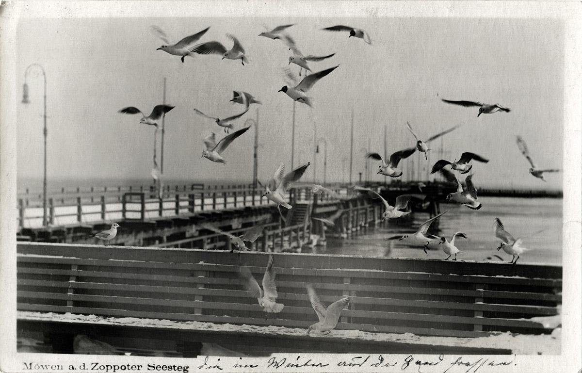 Czarnecki - fotografia oryginalna z której skopiowano mewy do fotomontaży
